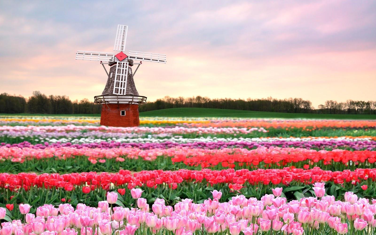 Новый сезон в Королевском парке цветов — Кёкенхоф