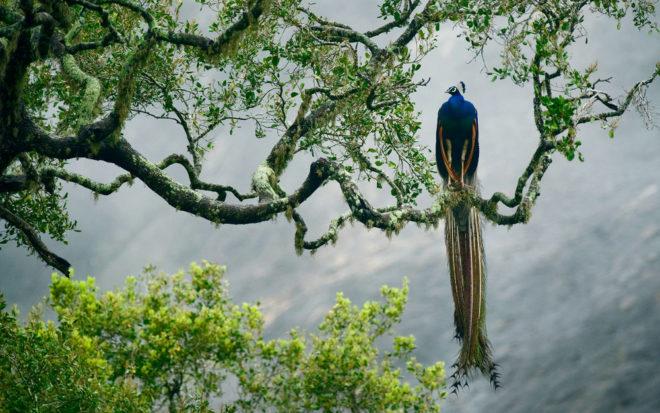 Национальный парк Яла — заповедник дикой природы в Шри-Ланке